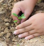 Folk som planterar treen. Royaltyfri Foto
