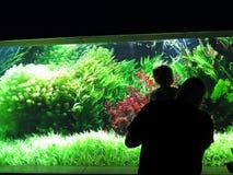 Folk som ser och tycker om remsan av det härliga färgrika akvariet på svart bakgrund med många exotisk fisk arkivfoto