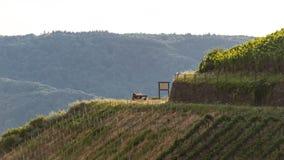 Folk som sitter på bänken på en vinrankakoloni på ett härligt varmt, soligt, sommardag i Västtyskland Royaltyfri Fotografi