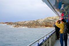 Folk som tar foto av skyddsremsor som ligger på den steniga kustlinjen Arkivfoton