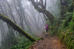 Folk som trekking i en skog royaltyfria bilder