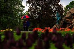 Folk som tycker om tulpan på skärm i Washington Park Albany NY på en regnig eftermiddag i vår Arkivfoto