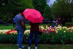 Folk som tycker om tulpan på skärm i Washington Park Albany NY på en regnig eftermiddag i vår Royaltyfria Foton