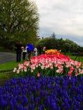 Folk som tycker om tulpan på skärm i Washington Park Albany NY på en regnig eftermiddag i vår Royaltyfri Fotografi