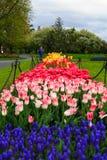 Folk som tycker om tulpan på skärm i Washington Park Albany NY på en regnig eftermiddag i vår Royaltyfri Foto