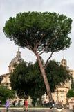 Folk, träd och byggnader för roman arkitektur i Rome, Italien royaltyfri bild