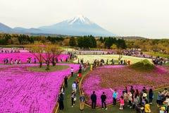 folkbesök Fuji Shibazakura Royaltyfria Foton