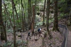 Folket fotvandrar i rainforesten av Jamison Valley Blue Mountains fotografering för bildbyråer