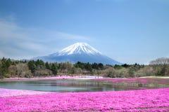 Folket från Tokyo och andra städer kommer till Mt Fuji och tycker om den körsbärsröda blomningen på våren varje år Arkivfoto