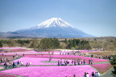 Folket från Tokyo och andra städer kommer till Mt Fuji och tycker om den körsbärsröda blomningen på våren varje år Royaltyfri Bild