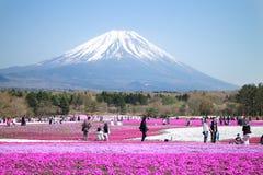 Folket från Tokyo och andra städer kommer till Mt Fuji och tycker om den körsbärsröda blomningen på våren varje år Royaltyfria Bilder