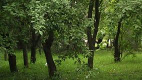 Folket går i parkerar under tjocka gröna träd i vår buskigt parkera med högt tätt grönt gräs Statisk ram lager videofilmer