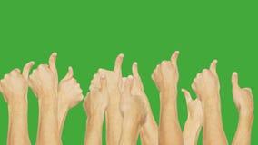 Folket grupperar uppvisning samtidigt av tummen upp på grön chromatangentbakgrund Ok för gest för folkhandvisning som isoleras på stock video