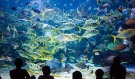 Folket håller ögonen på för havslivet i oceanariumen av Kuala Lumpur arkivbild