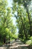 Folket har en vila in att parkera med träd och poppeln ner Royaltyfria Foton