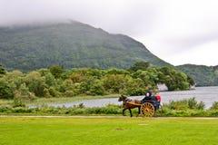 Folket i en kalesch på Muckross parkerar, Killarney, Irland Fotografering för Bildbyråer
