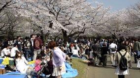 Folket som firar den körsbärsröda blomningen på Yoyogi, parkerar i Tokyo arkivfilmer