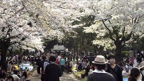Folket som firar den körsbärsröda blomningen på Yoyogi, parkerar i Tokyo stock video