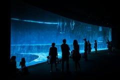 Folket som håller ögonen på delfin i det största akvariet i Genua, Europa har 600 djurart och 200 vegetal art arkivbild