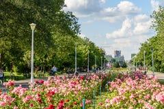Folket som tar en gå på sommardag i offentliga ungdomar, parkerar (Parcul Tineretului) Royaltyfri Bild