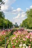 Folket som tar en gå på sommardag i offentliga ungdomar, parkerar (Parcul Tineretului) Fotografering för Bildbyråer