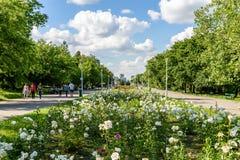 Folket som tar en gå på sommardag i offentliga ungdomar, parkerar (Parcul Tineretului) Royaltyfria Bilder