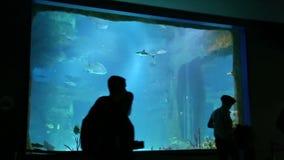 Folket står i Moskvarium den största oceanariumen i Ryssland stock video
