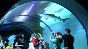 Folket står i Moskvarium den största oceanariumen i Ryssland arkivfilmer