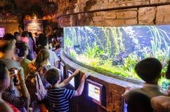 Folket stoppar och observerar fisken i en fiskbehållare i ett akvarium Arkivfoton