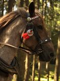 Folklore horse Stock Image