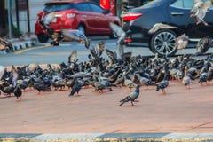 Folkmassa av duvan på den gå gatan i Bangkok, Thailand blurriness royaltyfria bilder