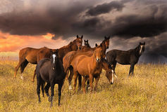 Folkmassa av hästar