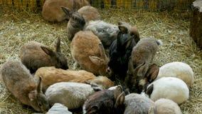 Folkmassa av kaniner av olika färger som sitter i en paddock stock video