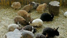Folkmassa av kaniner av olika färger som sitter i en paddock lager videofilmer