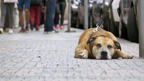 Folkmassan av likgiltigt folk på gatan förbigår den ledsna bundna trogna hunden stock video