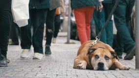 Folkmassan av likgiltigt folk på gatan förbigår den ledsna bundna trogna hunden arkivfilmer