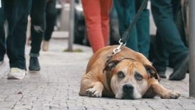 Folkmassan av likgiltigt folk på gatan förbigår den ledsna bundna trogna hunden lager videofilmer