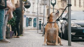 Folkmassan av likgiltigt folk på gatan förbigår den ledsna bundna trogna hunden långsam rörelse stock video