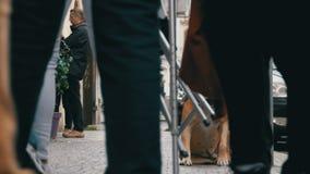 Folkmassan av likgiltigt folk på gatan förbigår den ledsna bundna trogna hunden långsam rörelse arkivfilmer