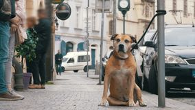 Folkmassan av likgiltigt folk på gatan förbigår den ledsna bundna trogna hunden långsam rörelse lager videofilmer