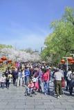 Folkmassan på Yuyuantan parkerar under våren Cherry Tree Blossom, Peking, Kina Royaltyfri Foto