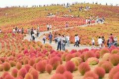 Folkmassan som tycker om Autumn Landscape på den Hitachi sjösidan, parkerar, Japan Arkivbilder