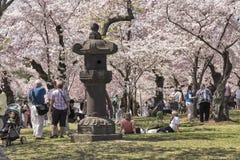 Folkmassor av turister på Cherry Blossom Festival Fotografering för Bildbyråer
