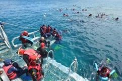 Folksnorkla och dyk från en plattform i den stora barriären Arkivbild