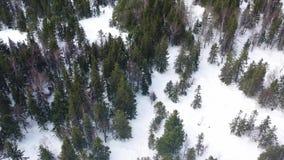 Folksnowboarding ner lutningen i vinterskogen, extremt sportbegrepp footage Flyg- bästa sikt av idrottsman nen arkivfilmer