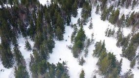 Folksnowboarding ner lutningen i vinterskogen, extremt sportbegrepp footage Flyg- b?sta sikt av idrottsman nen arkivfilmer