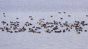 Folla degli uccelli acquatici Fotografia Stock