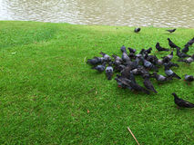 Folla dell'uccello fotografie stock