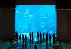 Folla riunita intorno al grande acquario Immagine Stock Libera da Diritti