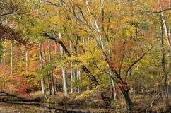Follaje amarillo y anaranjado colorido por el rastro Foto de archivo libre de regalías